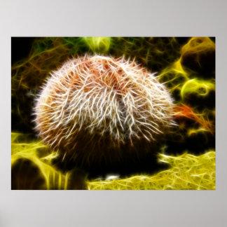Common Sea Urchin Posters