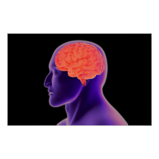 Conceptual Image Of Human Brain 1 Poster