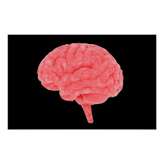 Conceptual Image Of Human Brain 4 Posters