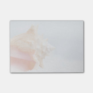 Conch Shell | Florida Post-it Notes