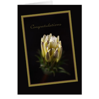 Congratulations - Daisy Flower Card