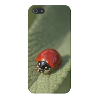 Convergent ladybird beetle on Cleveland sage Case For iPhone 5/5S