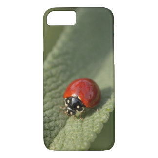 Convergent ladybird beetle on Cleveland sage iPhone 8/7 Case