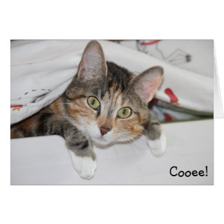 Cooee: Funny Birthday Card with Cat