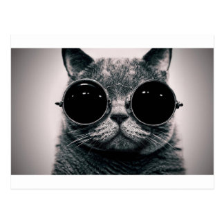 cool cat kool kat with shades postcard
