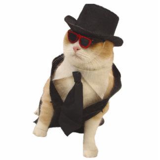Cool Cat Standing Photo Sculpture