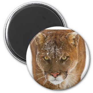 Cool Cougar 6 Cm Round Magnet