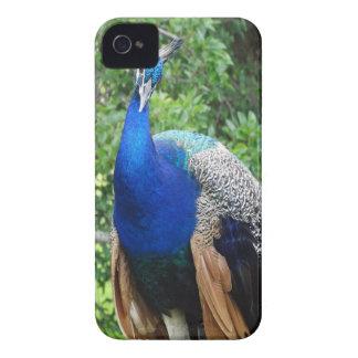 cool peafowl iPhone 4 Case-Mate case