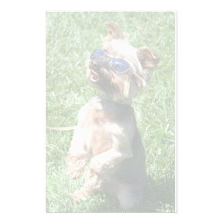 Cool Yorkshire Terrier letterhead Personalized Stationery