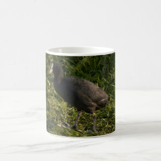 Coot Coffee Mug
