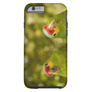 Copan, Honduras Tough iPhone 6 Case