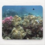 Coral, Agincourt Reef, Great Barrier Reef, Mousepad