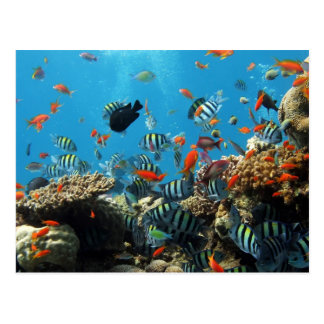 Coral Reef Fish Naturescape Postcard