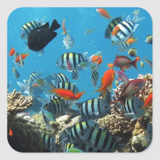 Coral Reef Fish Naturescape Square Sticker