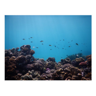 Coral Reef of Pacific Ocean Postcard