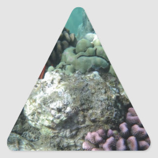 Coral reef triangle sticker