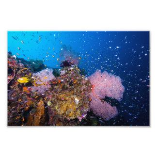 Coral Sea Photo Print