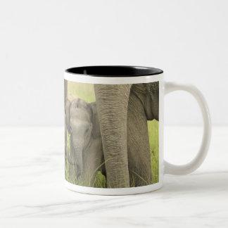Corbett National Park, Uttaranchal, India. Two-Tone Coffee Mug