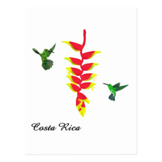Costa Rica Hummingbirds and Heliconia Postcard