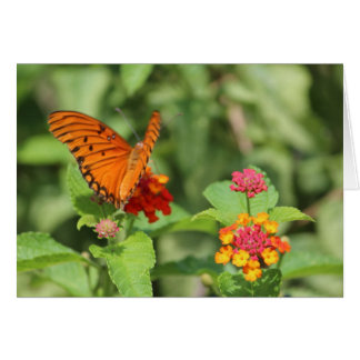 Costa Rican Butterfly Note Card