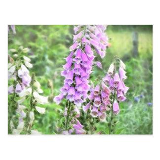 Cottage Garden Foxgloves Post Card