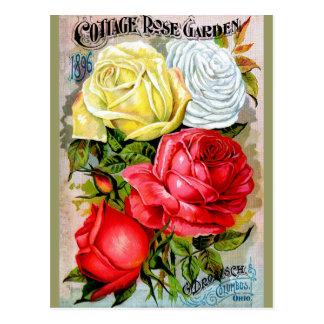 Cottage Rose Garden Post Cards