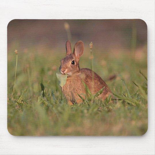 Cottontail Rabbit Mouse Pad
