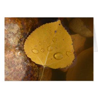 Cottonwood Leaf in Pond Card