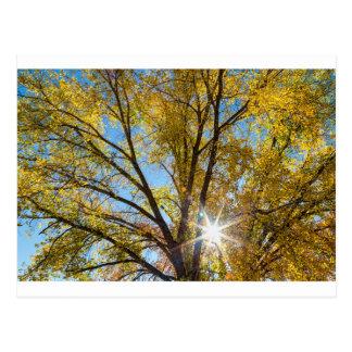 Cottonwood Sunshine Postcard