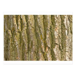 Cottonwood Tree Bark Texture Postcard