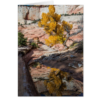 Cottonwood Tree In Fall Colors Card