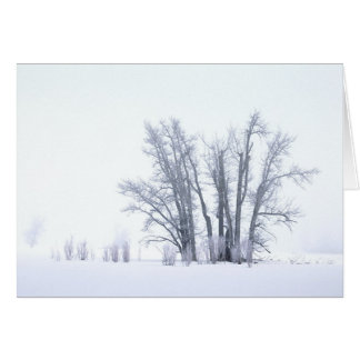 Cottonwoods in Snow Card
