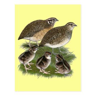 Coturnix Quail Family Postcard