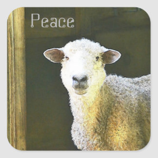Country Sheep Peace Square Sticker