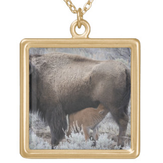 Cow Nursing Bison Calf, Yellowstone Gold Plated Necklace