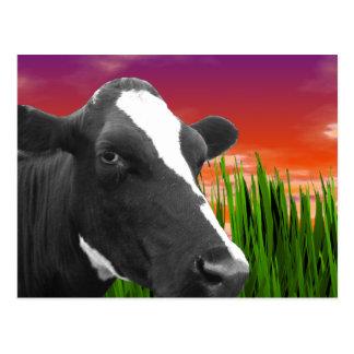 Cow On Grass & Vivid Sunset Sky Postcard