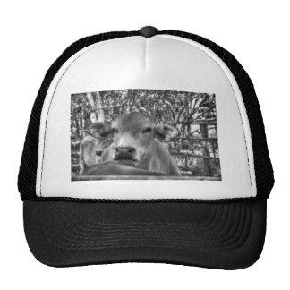 COW RURAL QUEENSLAND AUSTRALIA CAP