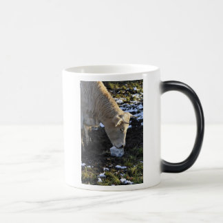 Cow which licking a block salt morphing mug