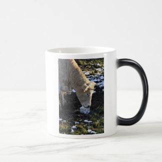 Cow which licking a block salt mugs