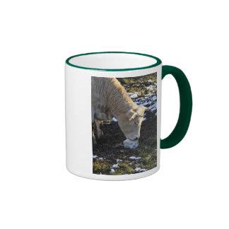 Cow which licking a block salt ringer mug