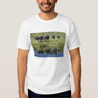 Cows reflected in canal, Henley, Taieri Plain, T Shirt