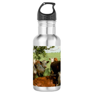 Cows Resting 532 Ml Water Bottle