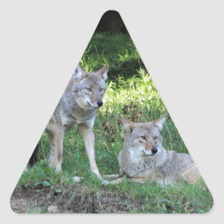 Coyote Collection Triangle Sticker