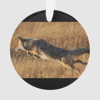 Coyote Flying