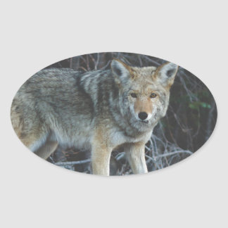 Coyote Hunting Oval Sticker