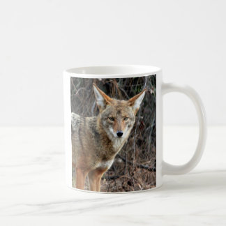 coyote in griffith park 005 coffee mug