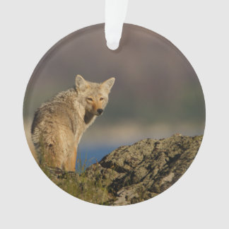 coyote ornament