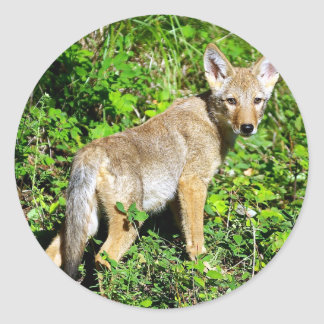 Coyote Pup - Over the Shoulder Look Classic Round Sticker