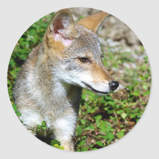 Coyote Pup Profile Classic Round Sticker