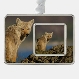 coyote silver plated framed ornament